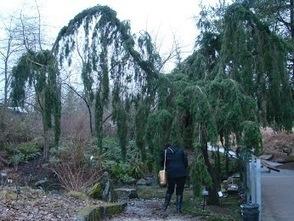 VanDusen+Gardens+Feb+2013+009.JPG (346x260 pixels) | What's Growing On | Scoop.it
