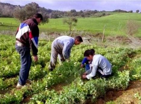Nécessité de former les agriculteurs dans des centres spécialisés - Algérie Presse Service | Agriculture et Alimentation méditerranéenne durable | Scoop.it