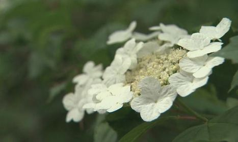 Herbal pharmacy found in Edmonton's River Valley   Point Of Care In Medicine   Scoop.it