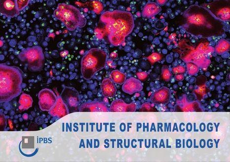 Feuilletez la nouvelle plaquette du laboratoire !   Institut de Pharmacologie et Biologie Structure   Scoop.it