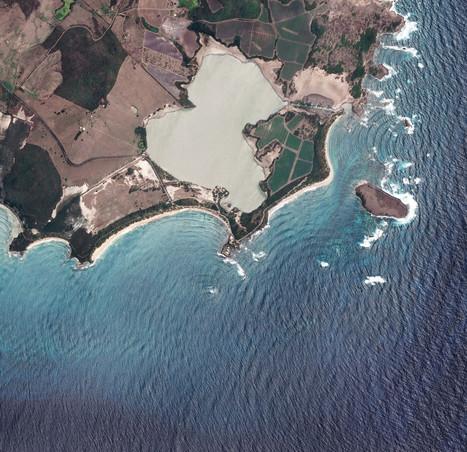 Les Salines: plages et tortues en Martinique   Périples et pérégrinations   Scoop.it