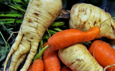 Supermarkets to stock 'ugly' vegetables this Christmas - Telegraph | The Barley Mow | Scoop.it