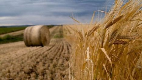 El Nino likely to reduce farm incomes and wheat exports - ABC Online | Agriculture | Scoop.it