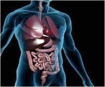 A.U.T.I.S.M Digestion Explained | Lightwork | Scoop.it