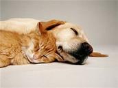 Why Women Love Men Who Love Cats | Kickin' Kickers | Scoop.it