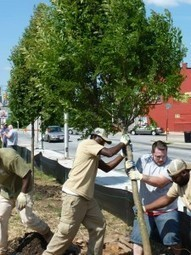 Social Life Under Cover: Tree Canopy and Social Capital in Baltimore, Maryland | #TreeNews | Scoop.it