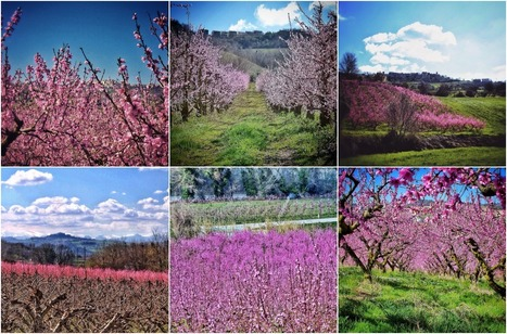 Le Marche, The Peach Blossom Land | Le Marche another Italy | Scoop.it