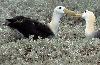 Paradis des Albatros : des milliers de poèmes en ligne   Ressources en ligne pour les collégiens   Scoop.it