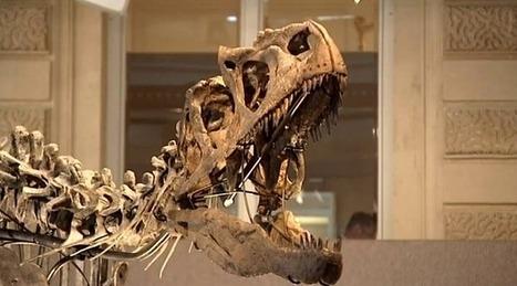 [REVUE DE PRESSE] A vendre : dinosaure, 150 millions d'années. Mise à prix 1 million d'euros | Clic France | Scoop.it