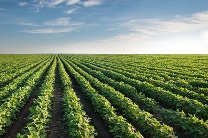 Third World Crop Pest: As Invasive Species Threatens Production, Harvest ... - iScienceTimes.com | Phytopath | Scoop.it