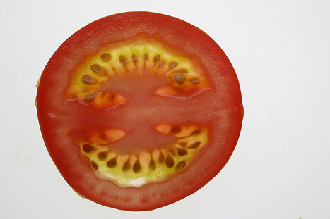 How To Save Tomato Seeds | Vegetable Gardening Resources | Scoop.it