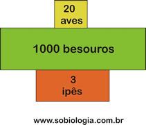 pirâmide ecológica | Aulas Biologia | Scoop.it