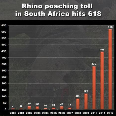 Official Rhino Death Toll: 618 | What's Happening to Africa's Rhino? | Scoop.it