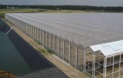 200 000  euros de subventions pour une ferme usine de tomates aux portes de Toulouse | Local et solidaire | Scoop.it