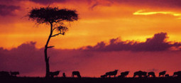 Kenya receives UNWTO award for innovation and excellence in tourism - Travelandtourworld.com   Tourism Innovation   Scoop.it