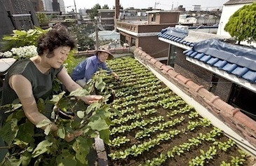 Urban farms give city folk 'food sovereignty' in Korea — City Farmer ... | Vertical Farm - Food Factory | Scoop.it