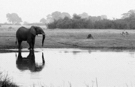 Afrique : Le continent noir protège ses sanctuaires écologiques | Biodiversité | Scoop.it