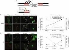 Invecchiamento: i telomeri si accorciano e non si riparano   Med News   Scoop.it