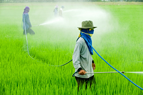 Intolérance au gluten : Monsanto serait responsable | Toxique, soyons vigilant ! | Scoop.it