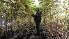 Entre Sète et Marseillan, l'INRA préserve une collection de vignes uniques au monde - France 3 | Vin et agroécologie | Scoop.it
