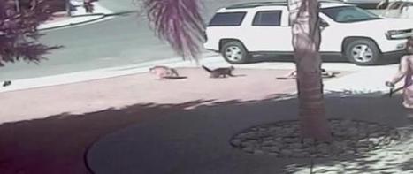 Hero Cat Saves Boy From Dog - I4U News | Heart warming animal stories | Scoop.it