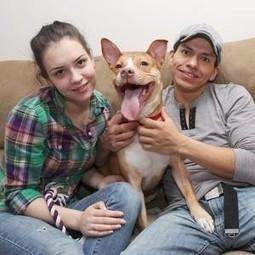 Dog brutally kicked in shocking surveillance video finds new loving home   Surveillance Studies   Scoop.it