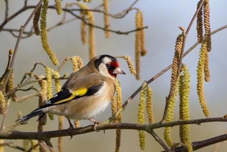 Biodiversité : Le déclin des oiseaux nicheurs se poursuit en France | Chronique d'un pays où il ne se passe rien... ou presque ! | Scoop.it