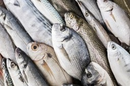 #Food #Safety: Should We Avoid All #Farm-Raised #Seafood? - Nutrition Action | Nutrition Today | Scoop.it