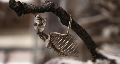 Un été au Muséum national d'Histoire naturelle | Revue de Web par ClC | Scoop.it