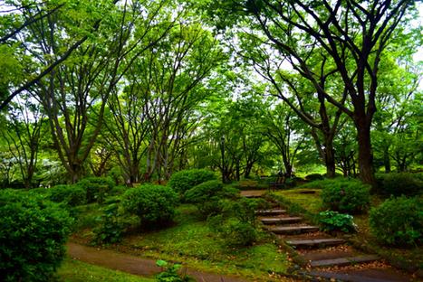 Japanese Gardens in Tokyo | Mark's Bucket | My Japanese Garden | Scoop.it