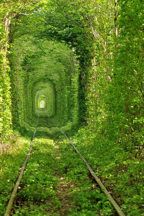 Ukraine: The 'Tunnel of love' | Wicked! | Scoop.it