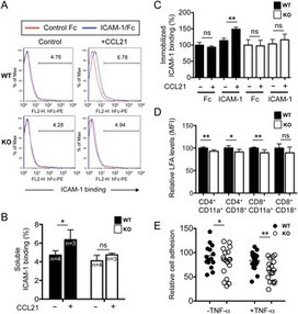 R-Ras Regulates Murine T Cell Migration and Intercellular Adhesion Molecule-1 Binding   Host Cell & Pathogen Interactions   Scoop.it