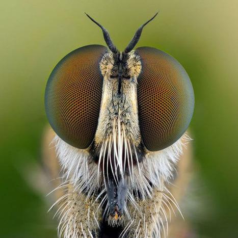 Fotos increíbles: las perfectas estructuras de los ojos de los insectos | Bichos en Clase | Scoop.it