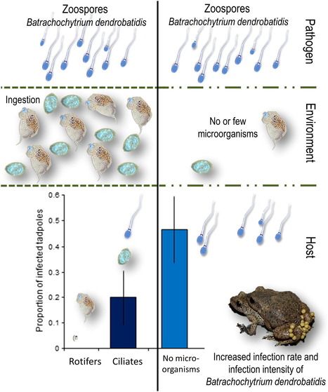 Microscopic Aquatic Predators Strongly Affect Infection Dynamics of a Globally Emerged Pathogen | Biotic interactions | Scoop.it