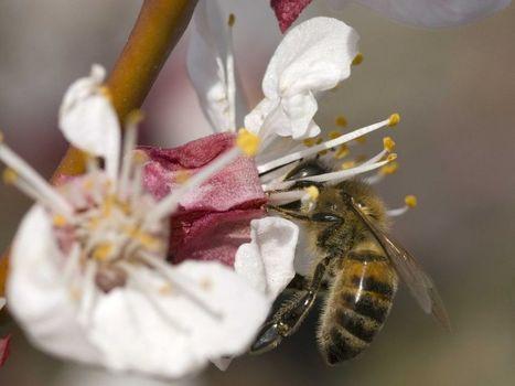le sucre est un facteur d'optimisme chez l'abeille | La recherche en apiculture | Scoop.it