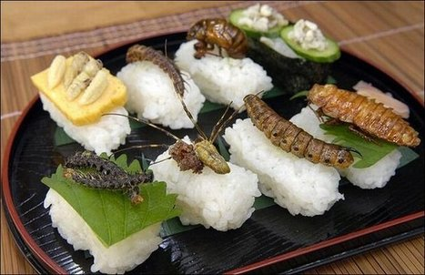 Bug-a-Boo's or Grubs Up | Entomophagy: Edible Insects and the Future of Food | Scoop.it