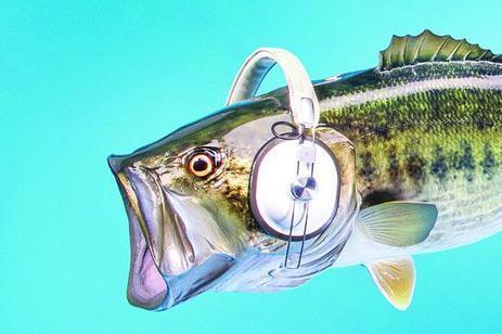 Which Sounds Spook Fish? | Outdoor Life | Aluminum Boat Guide | Scoop.it