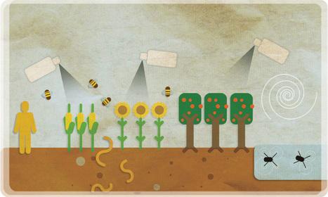 Pesticides : le Sénat examine une résolution défendant l'interdiction des néonicotinoïdes | Abeilles, intoxications et informations | Scoop.it