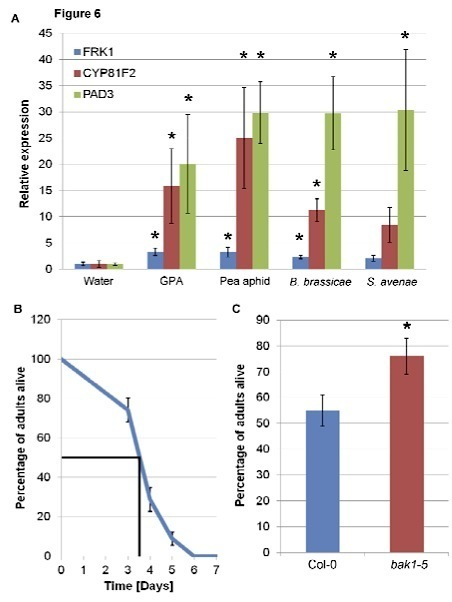 Plant Physiology: The leucine-rich repeat receptor-like kinase BAK1 and the cytochrome P450 PAD3 contribute to innate immunity to aphids in Arabidopsis (2014) | research on plant resistance gene for disease | Scoop.it