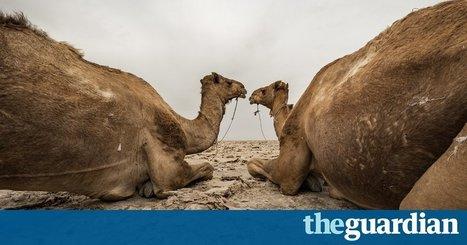 Deadly desert: working in 60C heat – in pictures | Convincingly Contrarian Crumbs | Scoop.it