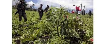 Marijuana Legalization Bid Successful - I4U News | Economic | Scoop.it