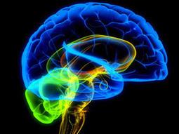 10 cosas que deberías saber sobre cómo funciona tu cerebro | I didn't know it was impossible.. and I did it :-) - No sabia que era imposible.. y lo hice :-) | Scoop.it