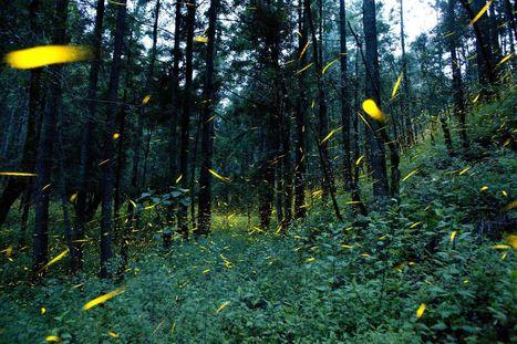 Dette écologique: pourquoi vivons-nous désormais à crédit   Ecologie   Scoop.it