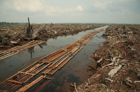 Deforestation Out Of Control  - The On Going 6th Mass Extinction | Deforestation | Scoop.it