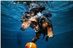 Funny Underwater Dogs   Flash Solver   Vale la pena Ver o Leer.   Scoop.it