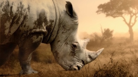 Swaziland accuses SA of backtracking on rhino horn trade | What's Happening to Africa's Rhino? | Scoop.it