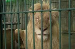 Endangered animals seized in Bangkok bust | Chris' Regional Geography | Scoop.it