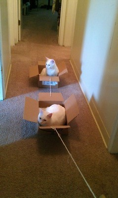 Box train of cats | Funny and crazy cats | Scoop.it