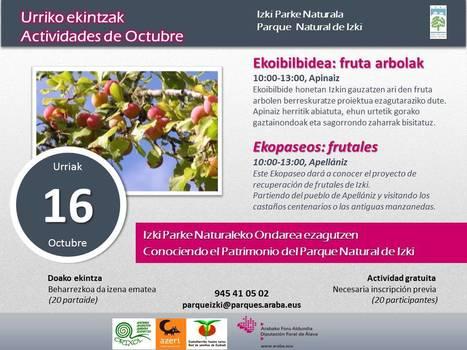 Ekopaseo: frutales / Ekoibilbidea: fruta arbolak | Mendialdea.info | Scoop.it