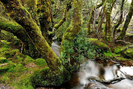 Reducing Protection for Tasmanian Wilderness Would Be Bad News for Forests | forests | Scoop.it